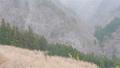 【冬】雪が降り積もる森林の様子 自然風景 73149421