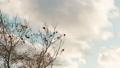 【自然風景】青空の下で雲が風に流れる様子 フィクス撮影 73149452