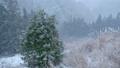 【冬】雪が降り積もる深い森林の中の様子 フィクス撮影 73150353