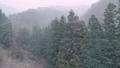 【冬】雪が降り積もる深い森林の中の様子 固定撮影 73223256