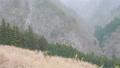 【冬】雪が降り積もる深い森林の中の様子 固定撮影 73223271