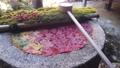 [秋天]柳屋觀音的花水 73264976
