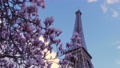 Eiffel tower with the sakura tree branches and blue sky 73310385