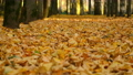 Alley in autumn city park with covering ground yellow leaves, closeup view. 73375315