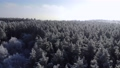 Winter nature concept. Aerial view of a winter forest 73388317