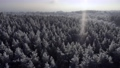 Winter nature concept. Aerial view of a winter forest 73388321