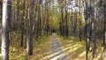 Beautiful trail in the autumn forest or urban park. Smooth movement 73388323