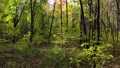 Beautiful trail in the autumn forest or park. Smooth movement 73388324