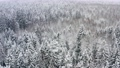 Aerial picturesque frozen forest with snow covered pine trees. Top view flyover beautiful winter woodland at snowfall. Drone flying high over treetops. Flight over white woods 73531712