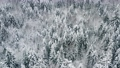 Aerial picturesque frozen forest with snow covered spruce and pine trees. Top view flyover winter woodland at snowfall. Drone flying over treetops. Snow flakes falling down. Flight over white woods 73531714