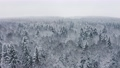 Aerial picturesque frozen forest with snow covered spruce and pine trees. Top view flyover winter woodland at snowfall. Drone flying over treetops. Snow flakes falling down. Flight over white woods 73532900
