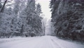 Picturesque winter forest with snow covered trees. Beautiful woodland at snowfall. Wide angle gimbal steadicam shot of white woods and falling snowflakes. Camera moves straight on snowy forest road 73533132