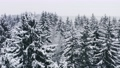 Aerial picturesque frozen forest with snow covered spruce and pine trees. Top view flyover winter woodland at snowfall. Drone flying through treetops. Snow flakes falling down. Flight over white woods 73533134