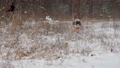Funny dog with brown fur runs along meadow with white snow 73708867