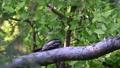 가만히 움직이지 않고 나무 혹처럼 보이는 요타카 73743311