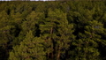 Flying above the green coniferous forest. 73768180