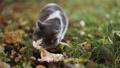 Beautiful fluffy stray cat eats on the street. 73794667