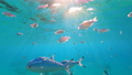 Wonderful and beautiful underwater world with corals and tropical fish. 73837871