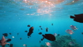 Wonderful and beautiful underwater world with corals and tropical fish. 73837878