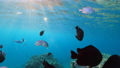 Wonderful and beautiful underwater world with corals and tropical fish. 73837880
