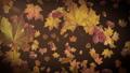 Autumn leaves falling slowly on defocused background 73843296