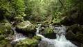 녹색 숲의 이끼 낀 바위와 계곡 73927669