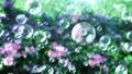 Soap bubble bubble park flower background loop 73945774