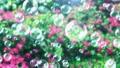 Soap bubble bubble park flower background loop 73945777