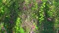 【東京都】萩のトンネル 府中市郷土の森公園 74005480