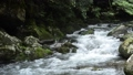 월계수 숲과 계곡의 흐름 74017319