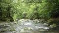 밝은 숲을 배경으로 계곡의 흐름 74017320