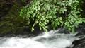 녹색 지엽 아래의 강물 74017321