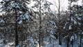 aerial shot flying through winter snow crown trees with sun shining sun beams wonderful world 74112321