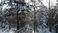 aerial shot flying through winter snow crown trees with sun shining sun beams wonderful world 74112323