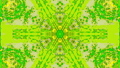Organic green and yellow colored kaleidoscope, colorful elements for abstract project.  74132087