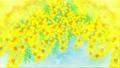 ミモザが風で揺れる風景 ループ 水色背景  74290358