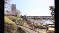 4K延時攝影前橋公園櫻花群馬縣廳櫻花觀賞 74318846