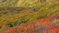 栗駒山神的地毯全山秋葉之美日本第一大紅葉山日本最佳景觀之一 74461159