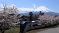 Spring cherry blossom trees and the Fuji Express And Mt. Fuji 74549622