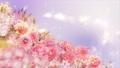 美麗的花園,柔和的粉紅色花朵盛開 74579012