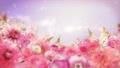 美麗的花園,柔和的粉紅色花朵盛開 74579013