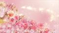 美麗的花園,柔和的粉紅色花朵盛開 74579016