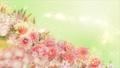 美麗的花園,柔和的粉紅色花朵盛開 74579019