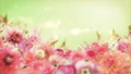 美麗的花園,柔和的粉紅色花朵盛開 74579020