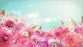 美麗的花園,柔和的粉紅色花朵盛開 74579022