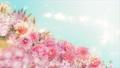 美麗的花園,柔和的粉紅色花朵盛開 74579023