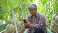 Happy elderly Asian farmer sitting in a greenhouse and take melon photos with a smartphone and upload to social media. Concept of organic agriculture and healthy food 74628271