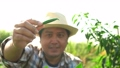 Happy Middle aged Asian farmer sitting and check chili on an organic farm for harvest to market. Concept of organic agriculture and healthy food 74628272
