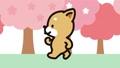 柴犬坤的步行櫻花版 74703880