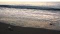 日落,海浪,沙灘,慢動作拍攝 74785526
